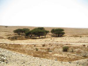 לימן מוריק במדבר, מערבית לכביש 40 באזור צומת גורל
