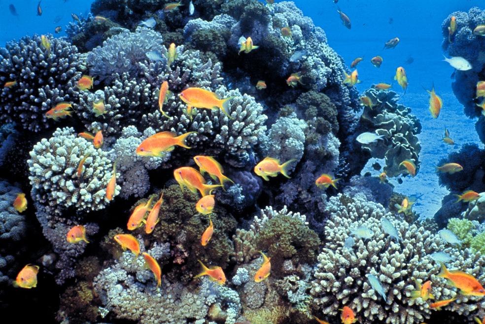 חוף האלמוגים, אילת